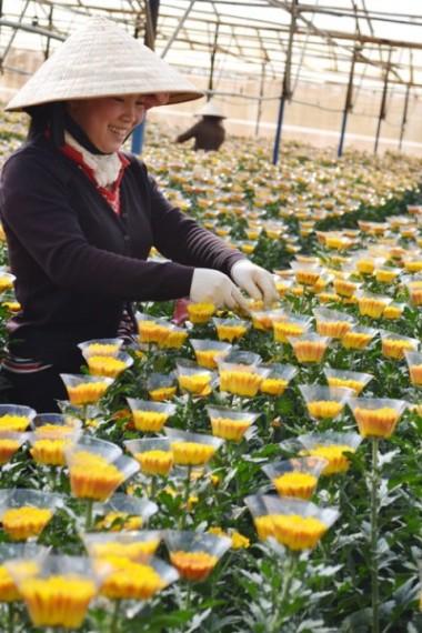 Làng hoa Thái Phiên, địa chỉ du lịch quen thuộc của nhiều du khách khi đến Đà Lạt