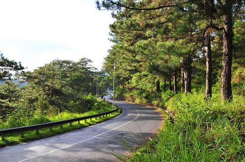 Con đèo đi qua màu xanh mát của những đồi thông