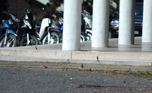 Chim rừng ở Đại học Đà Lạt