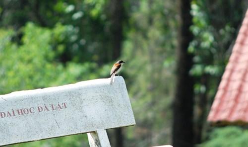 Chim đậu ghế đá