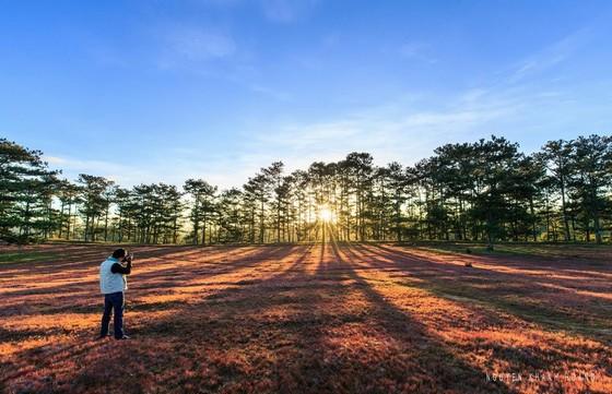 Buổi sáng sớm trong rừng thông Đà Lạt