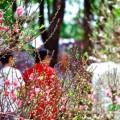 chợ hoa Tết Đà Lạt