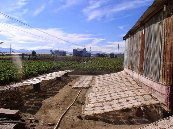 Làng bánh tráng Lạc Lâm trên mảnh đất Lâm Đồng