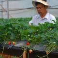 Phát triển du lịch dựa trên nông nghiệp công nghệ cao