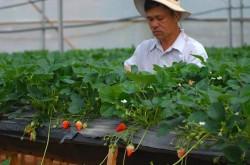 Lợi thế phát triển du lịch bền vững gắn với nông nghiệp công nghệ cao
