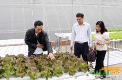 Du lịch ở trang trại rau thủy canh lớn nhất Đà Lạt