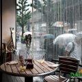 Những cơn mưa hè bất chợt