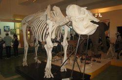Bảo tàng sinh học Tây Nguyên ở Đà Lạt – điểm tham quan học hỏi