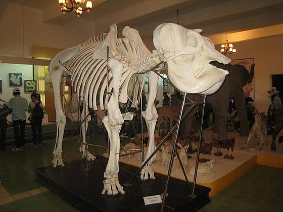 Bảo tàng sinh học Đà Lạt