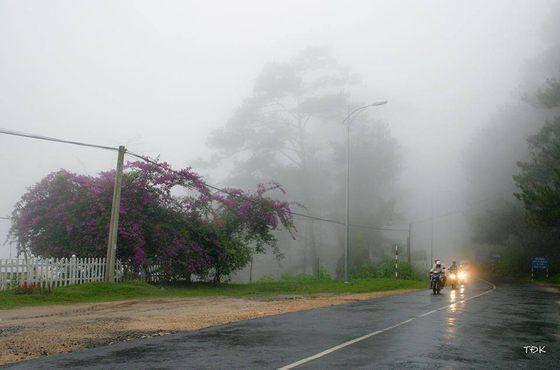 Những cơn mưa mùa hè của Đà Lạt