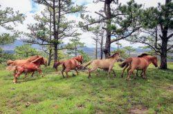 Thảo nguyên ngựa bên bờ hồ Ankroet Đà Lạt