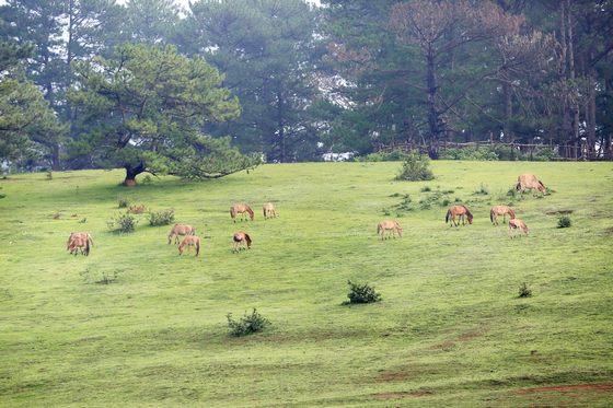 đồng cỏ ngựa ở Đà Lạt