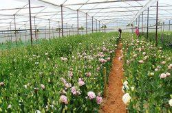 Lâm Đồng vùng chuyên canh rau hoa lớn nhất Việt Nam