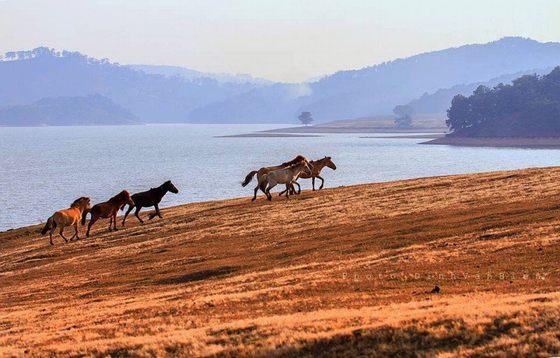 Thảo nguyên ngựa bên hồ Ankroet Đà Lạt