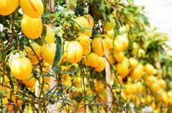 Định Farm sức hấp dẫn đặc biệt với du khách đến Đà Lạt