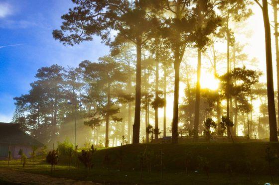 Sáng sớm mùa thu Đà Lạt