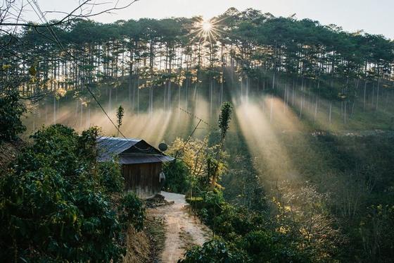 Tia nắng ban mai của Đà Lạt thơ mộng