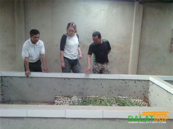 Du khách tham quan trang trại nuôi dế