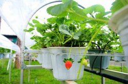 Biofresh – điểm sáng du lịch canh nông