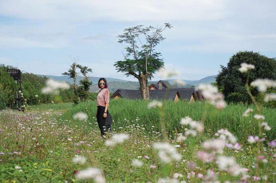 Trang trại bò sữa Đà Lạt - Dalat Milk Farm