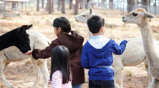 Du khách vui chơi tại vườn thú