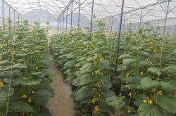 Trang trại nông nghiệp Vietfarm điểm đến du lịch canh nông thú vị ở Đà Lạt