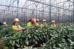 Kiến Huy farm – trang trại nông nghiệp sạch Đà Lạt của người Sài Gòn