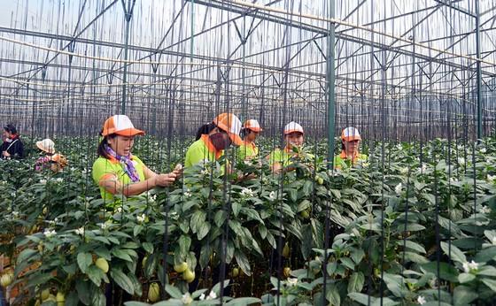 Kiến Huy farm Đà Lạt