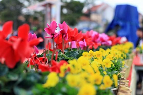 Hoa trên thành phố hoa Đà Lạt