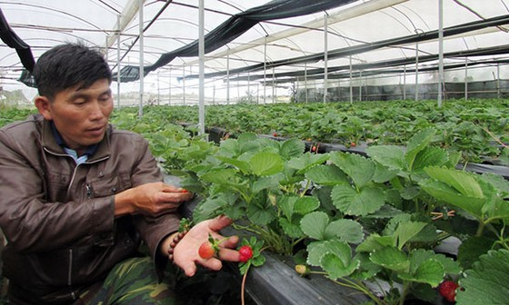 Trang trại nông nghiệp Vietfarm