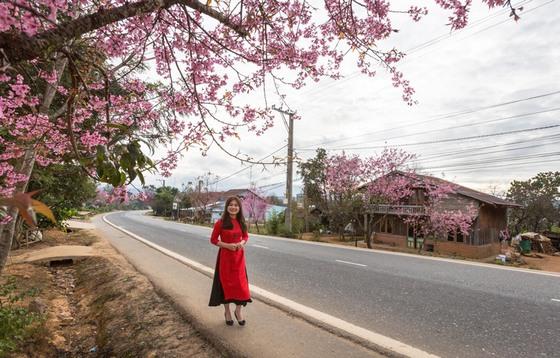 người Đà Lạt trở thành lữ khách - anh Nghia Nguyen
