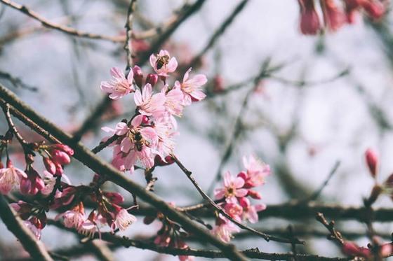 loài hoa của tuổi thanh xuân