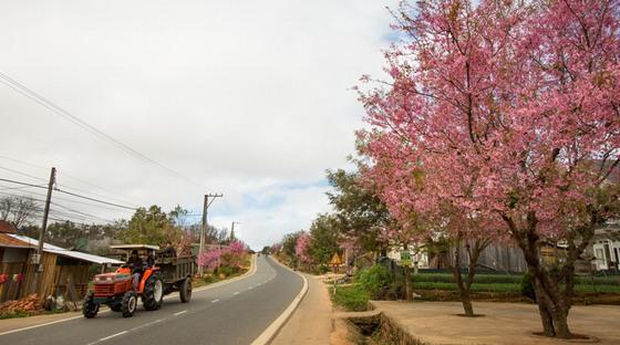 sắc hoa bên đường vào thành phố