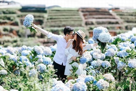 lãng mạn tại cánh đồng cẩm tú cầu