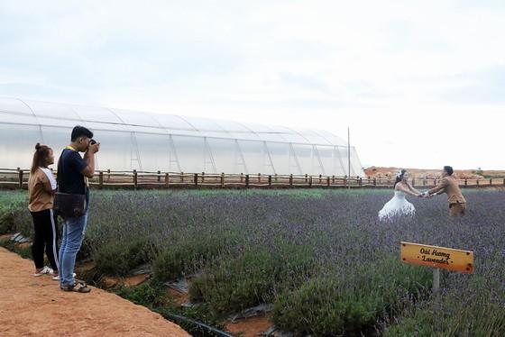Du khách chụp ảnh tại Cầu Đất Farm