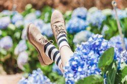 Tại thành phố Đà Lạt có một vườn hoa cẩm tú cầu mang đến cho du khách cảm xúc miên man