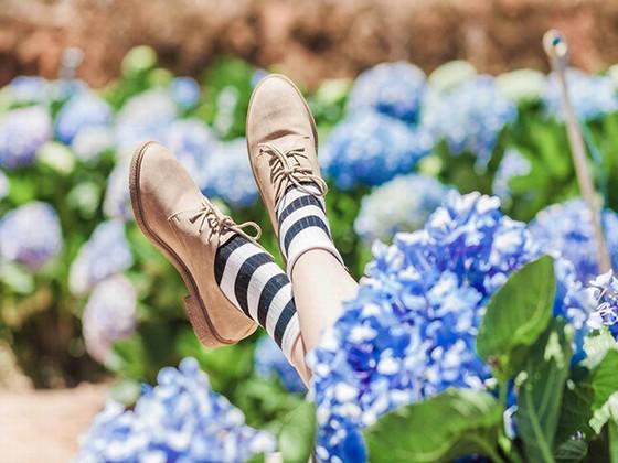 Miên man hoa cẩm tú cầu
