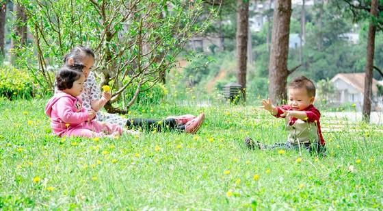 thảm cỏ vui đùa cho trẻ em Đa Lạt