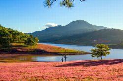 Mùa hội Cỏ hồng Lang Biang Đà Lạt 2018 với 3 hoạt động chính