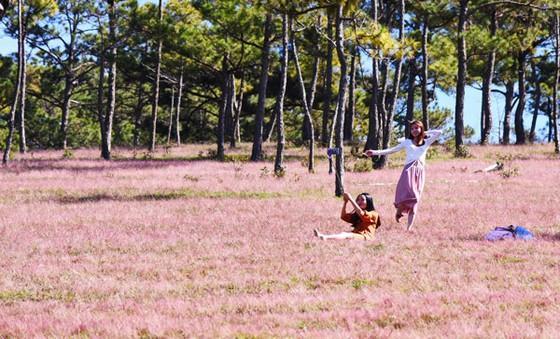 du khách hào hứng chụp ảnh với đồi cỏ hồng