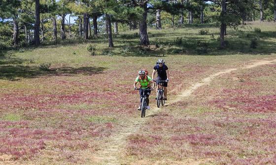 Đạp xe xuyên qua những đồi cỏ hồng