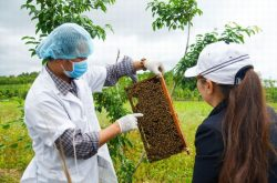 Vườn ong Thái Dương với mô hình du lịch canh nông của nghề ong