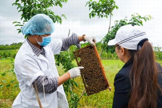 Du lịch vườn ong Thái Dương