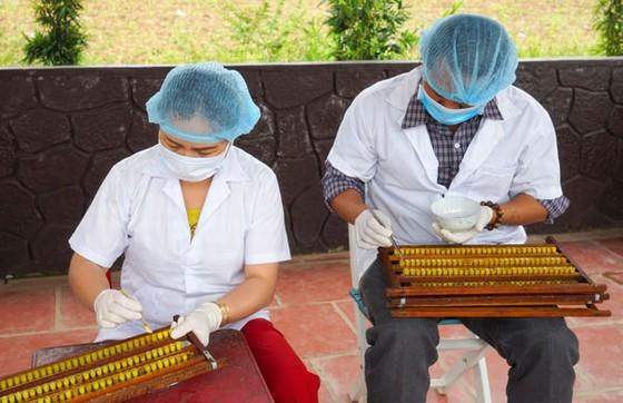 nhân viên kỹ thuật tại vườn ong