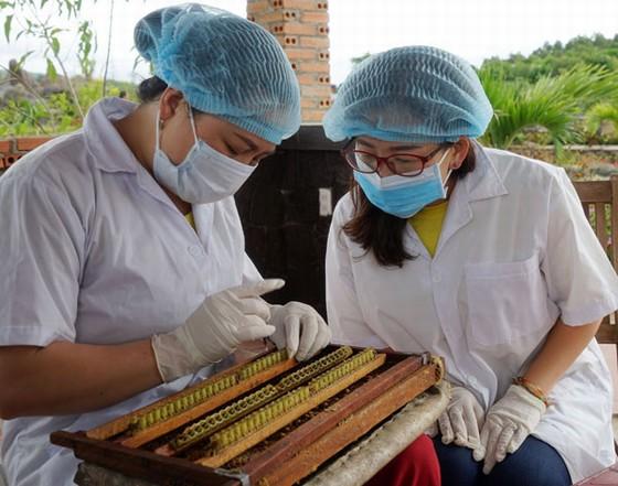 trải nghiệm quy trình nuôi ong lấy mật