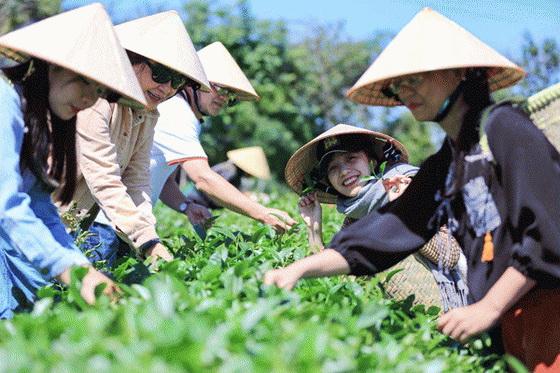 du khách trải nghiệm hái trà