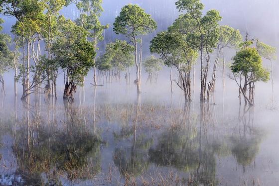 màu xanh của cây hòa quyện với màu trắng của sương sớm