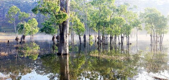 rừng cây lung linh trong mặt hồ