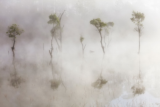 Khu rừng ngập nước tại hồ Tuyền Lâm Đà Lạt huyền ảo trong sương mai