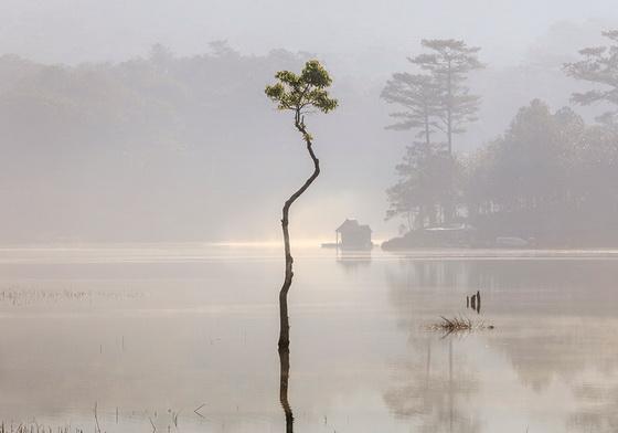 Rừng ngập nước đẹp như tranh thủy mặc